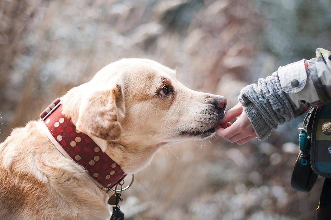 la lutte contre les déjections canines est déclarée !