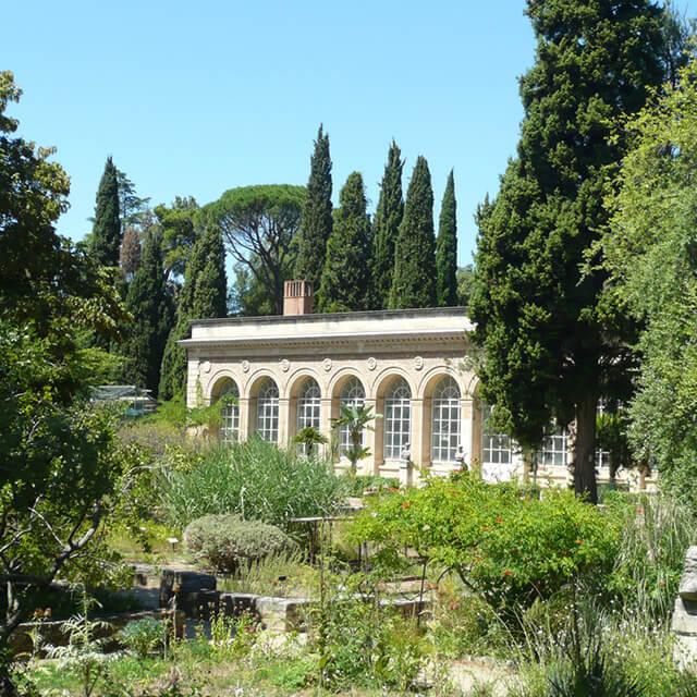 Jardin des plantes à Montpellier